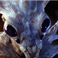 Alienígenas insectoides extreterrestres tipos